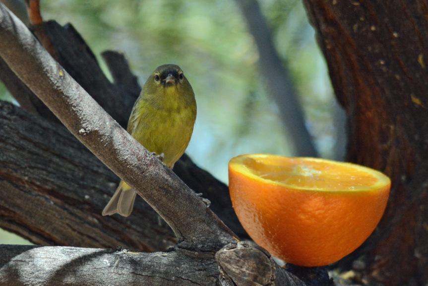 OCWA Orange 2.16.16