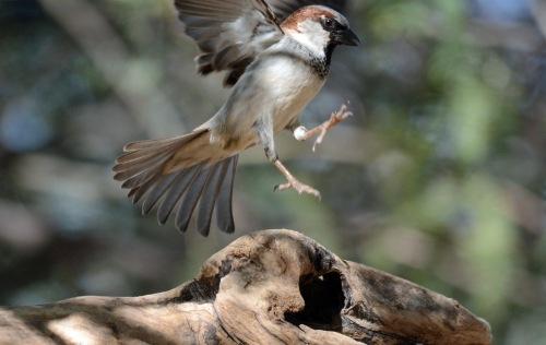 Sparrow Land