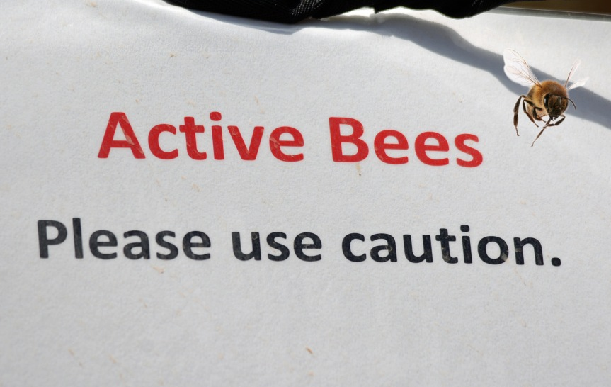 Active Bees_edited-1