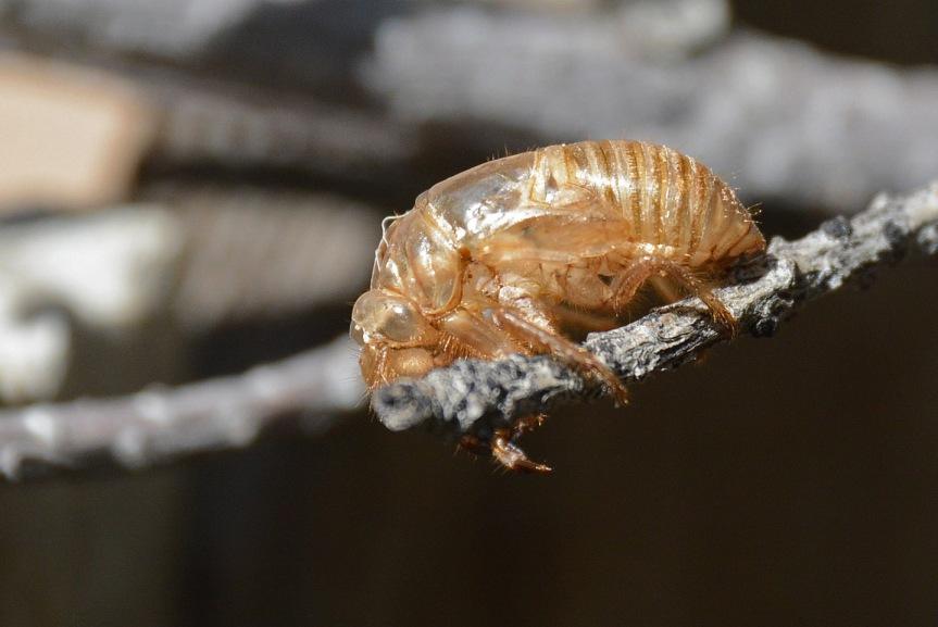 Cicada Exo 1_edited-1