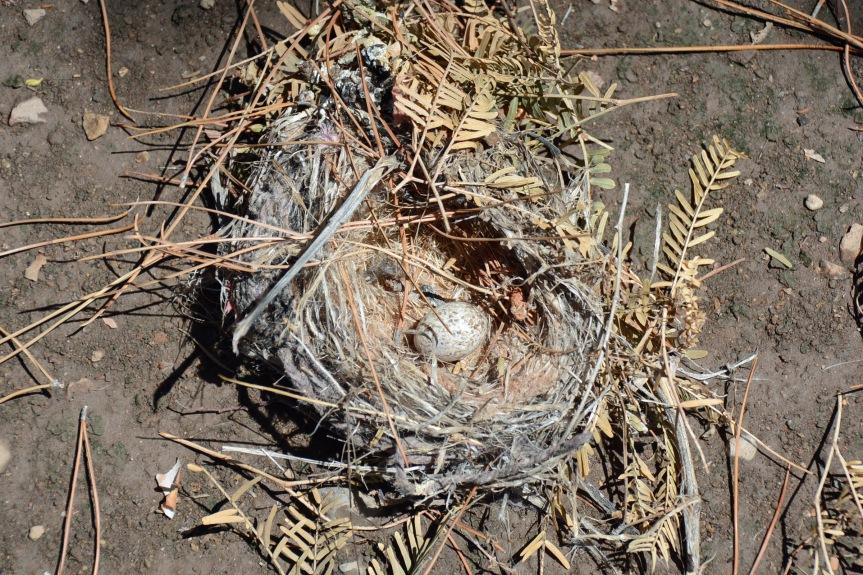 Nest Storm