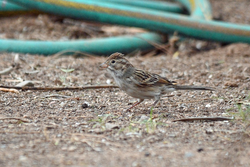 sparrow-1_edited-1