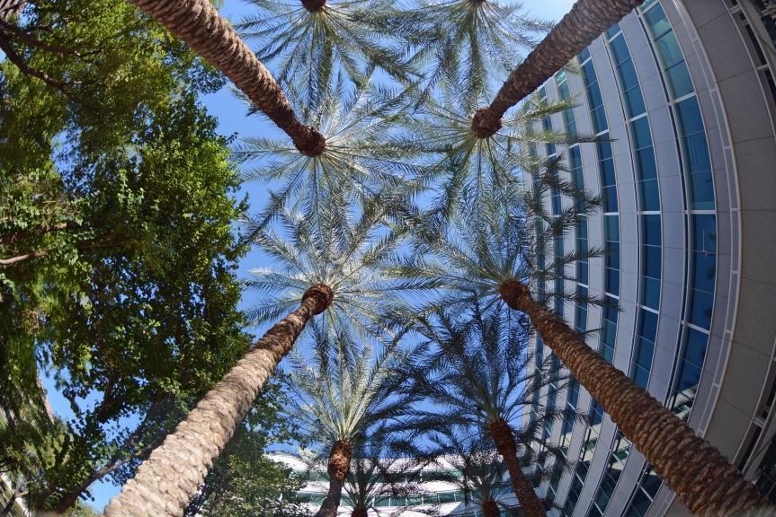 palms-fisheye