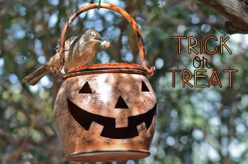 trick-or-treat-thrasher_edited-1
