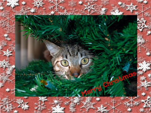 christmas-card-2010-goog
