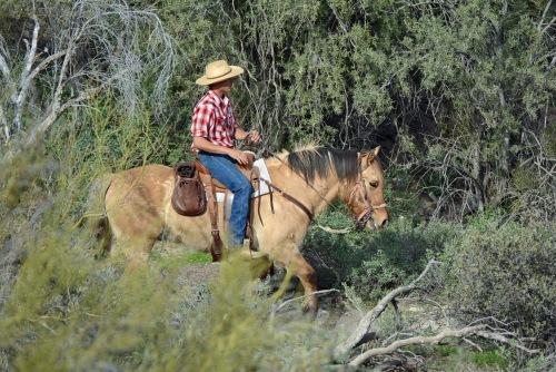 horseback-rider