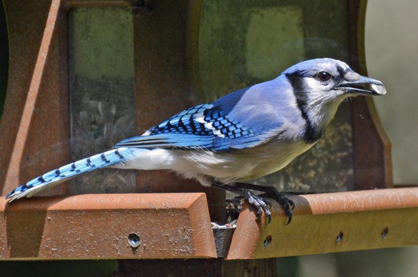 Blue Jay RV