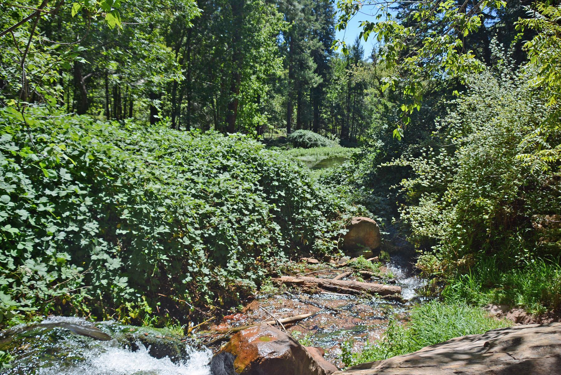 Tonto Creek 2