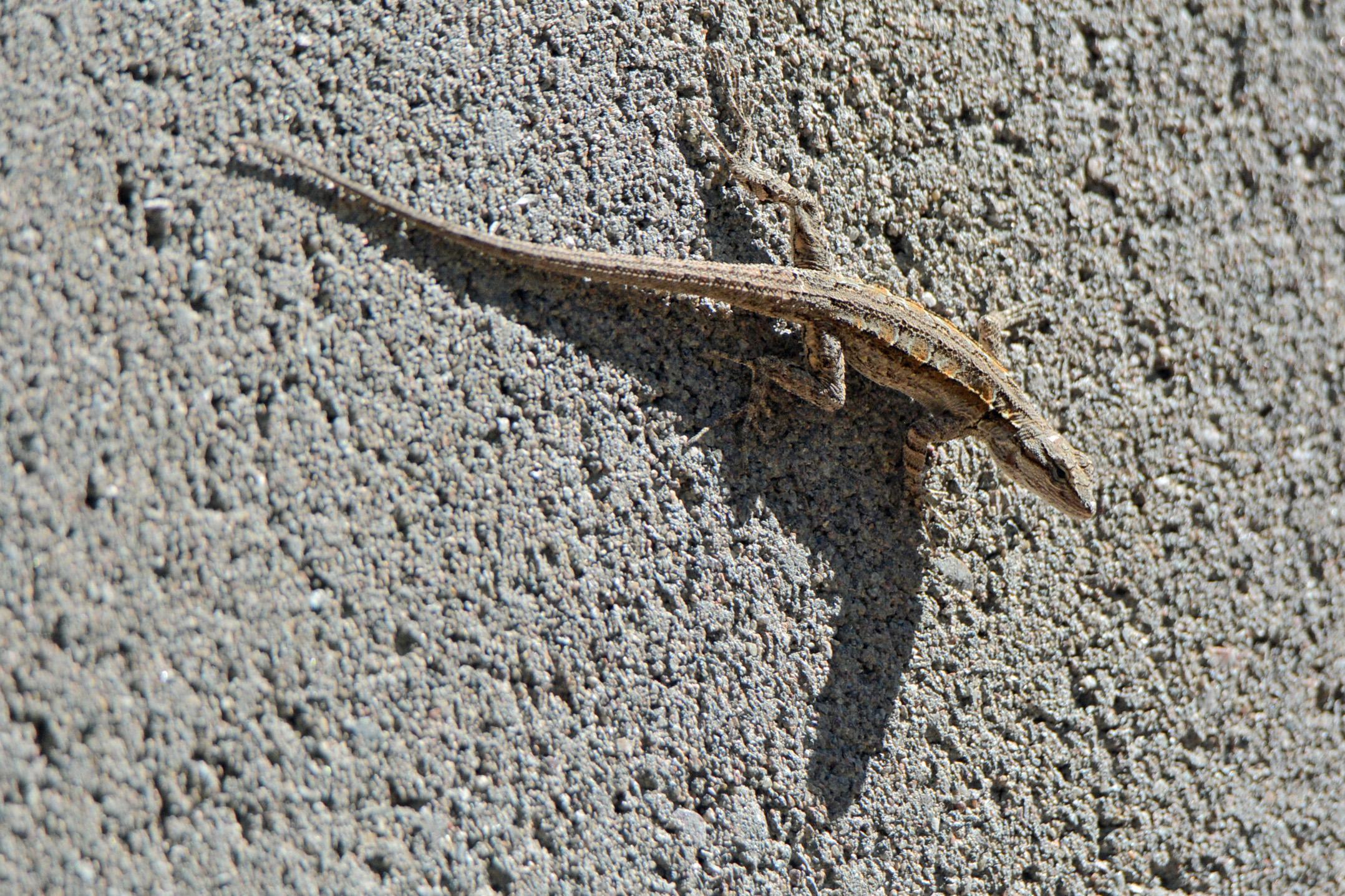 Lizard 10.15