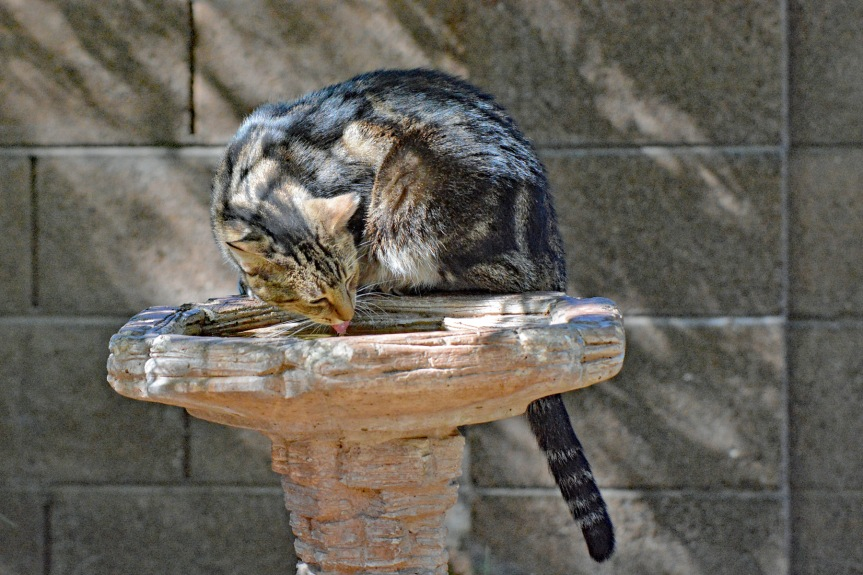Stripey Birdbath 10