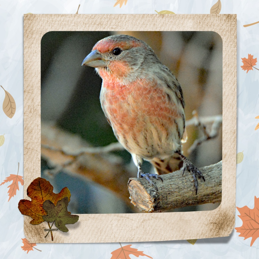 Autumn Finch_edited-1