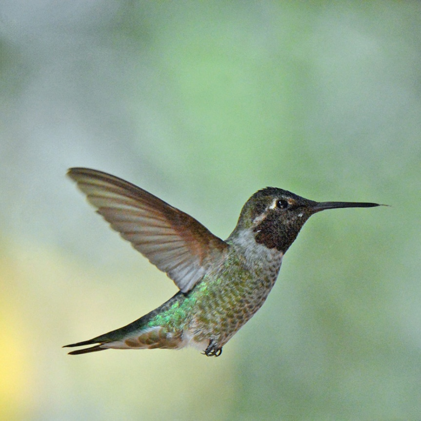 Hummer Flight 10_edited-1