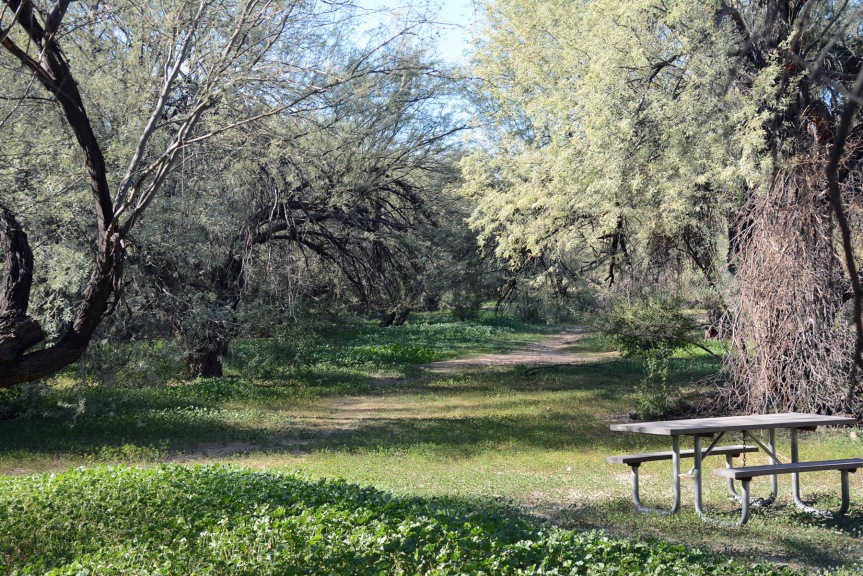 Mesquite Bosque