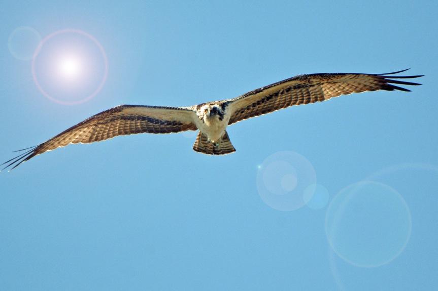 Osprey Flare