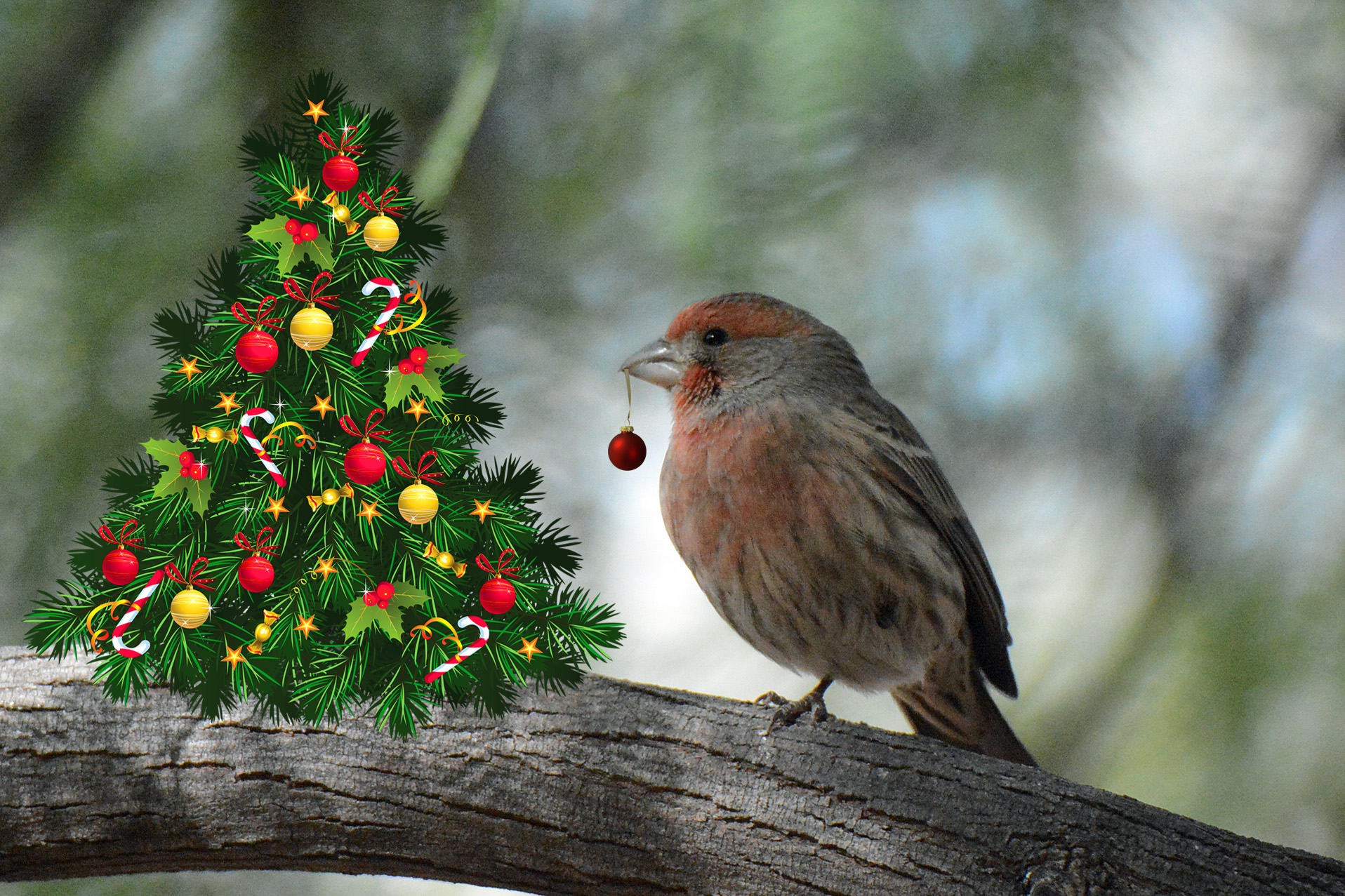 Finch Christmas Tree_edited-1
