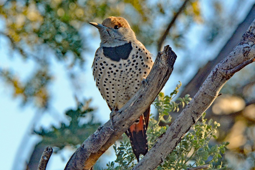 Gilded Flicker_edited-1