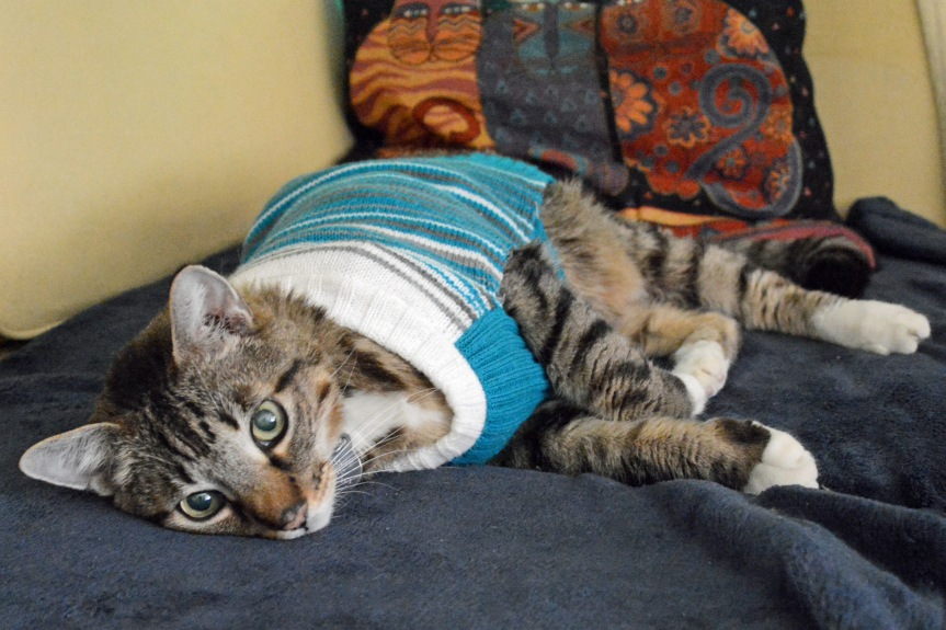 Google Sweater