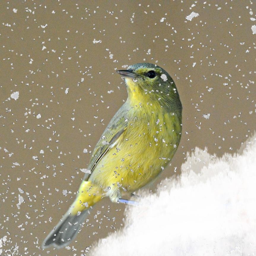 OCWA in Snow 2_edited-1