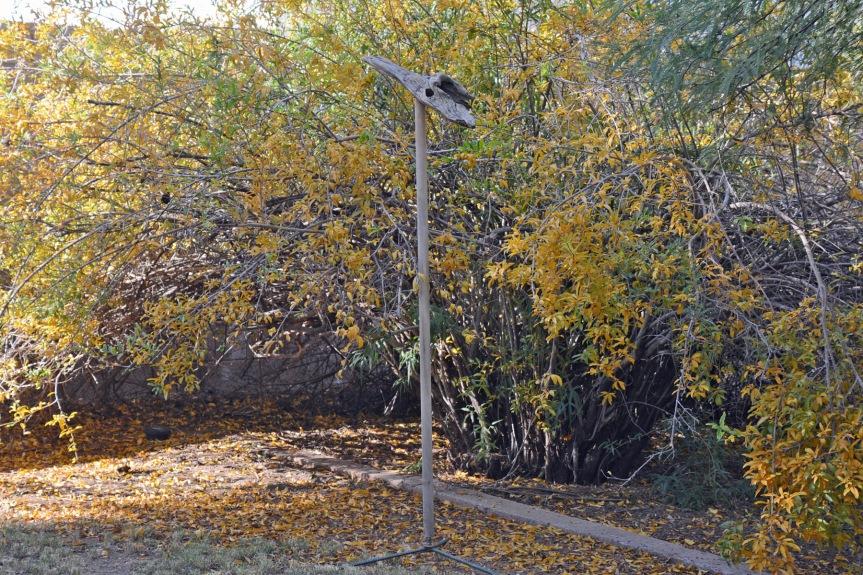 Perch in Autumn