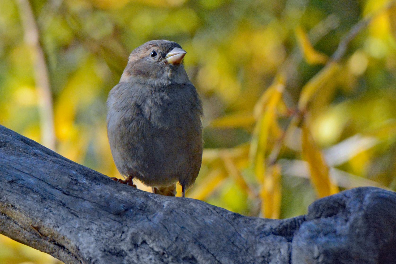 Sparrow Perch 1