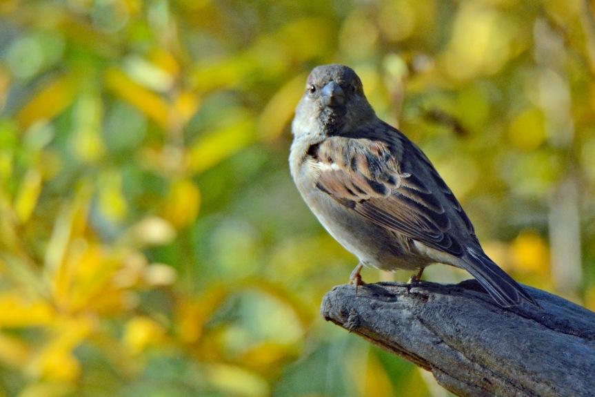 Sparrow Perch 2