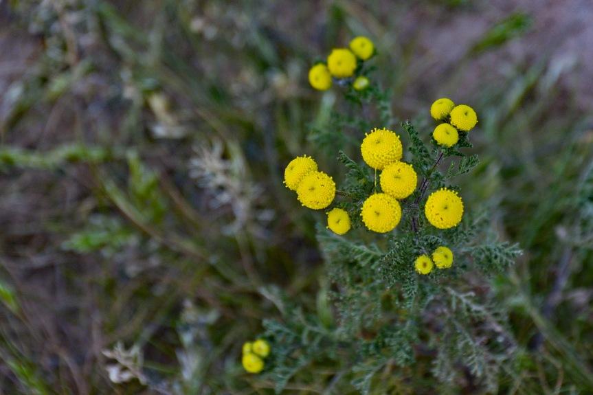 EM Yellow Flowers