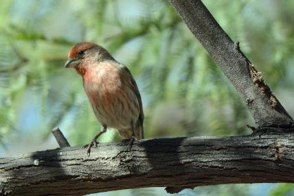 Finch 3.22