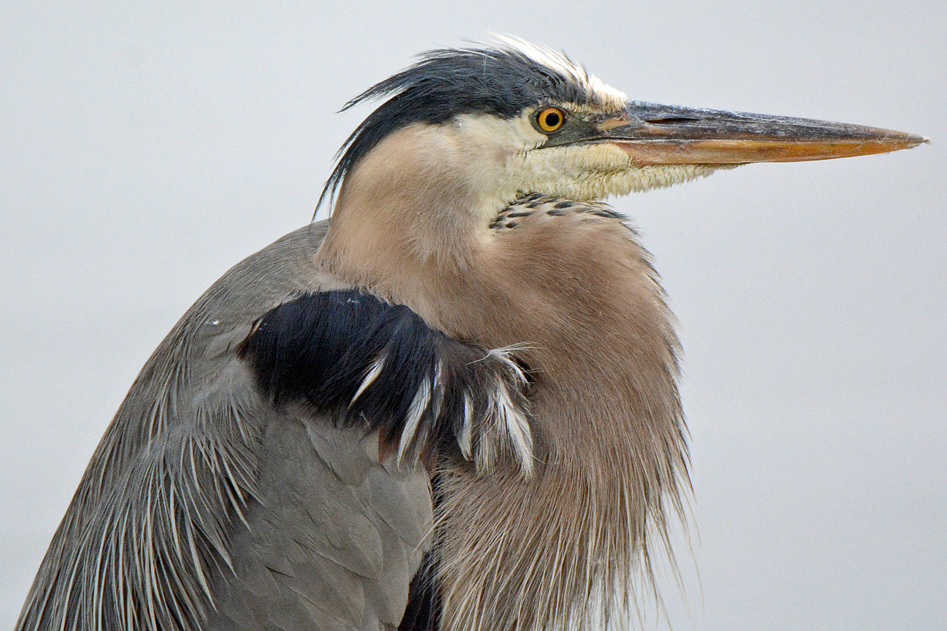 GBH Sharpened