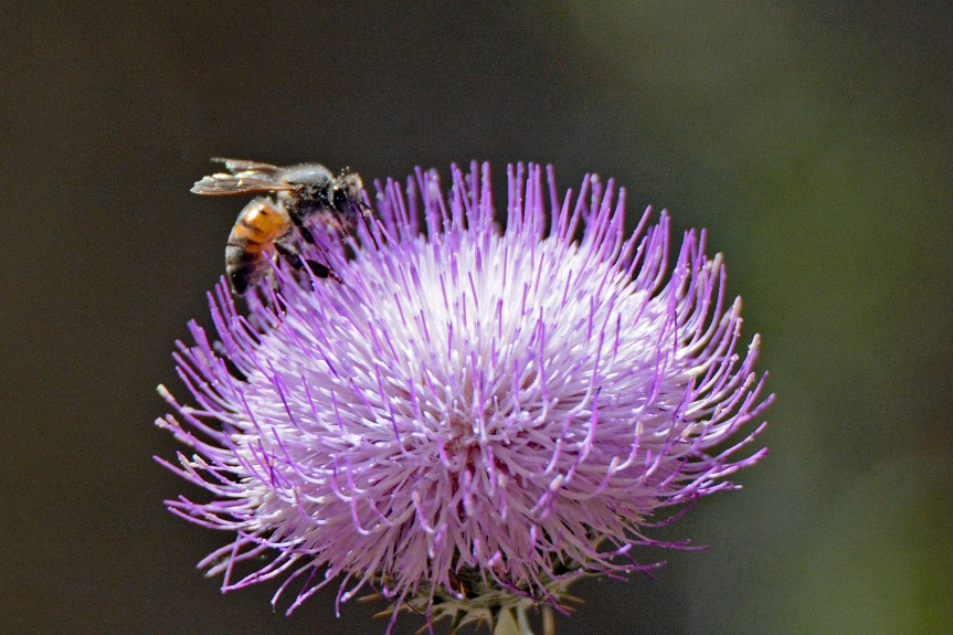 Purple Globe with Bee