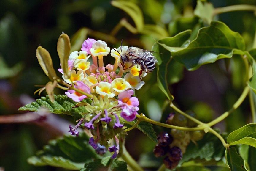 Bee. 6.1