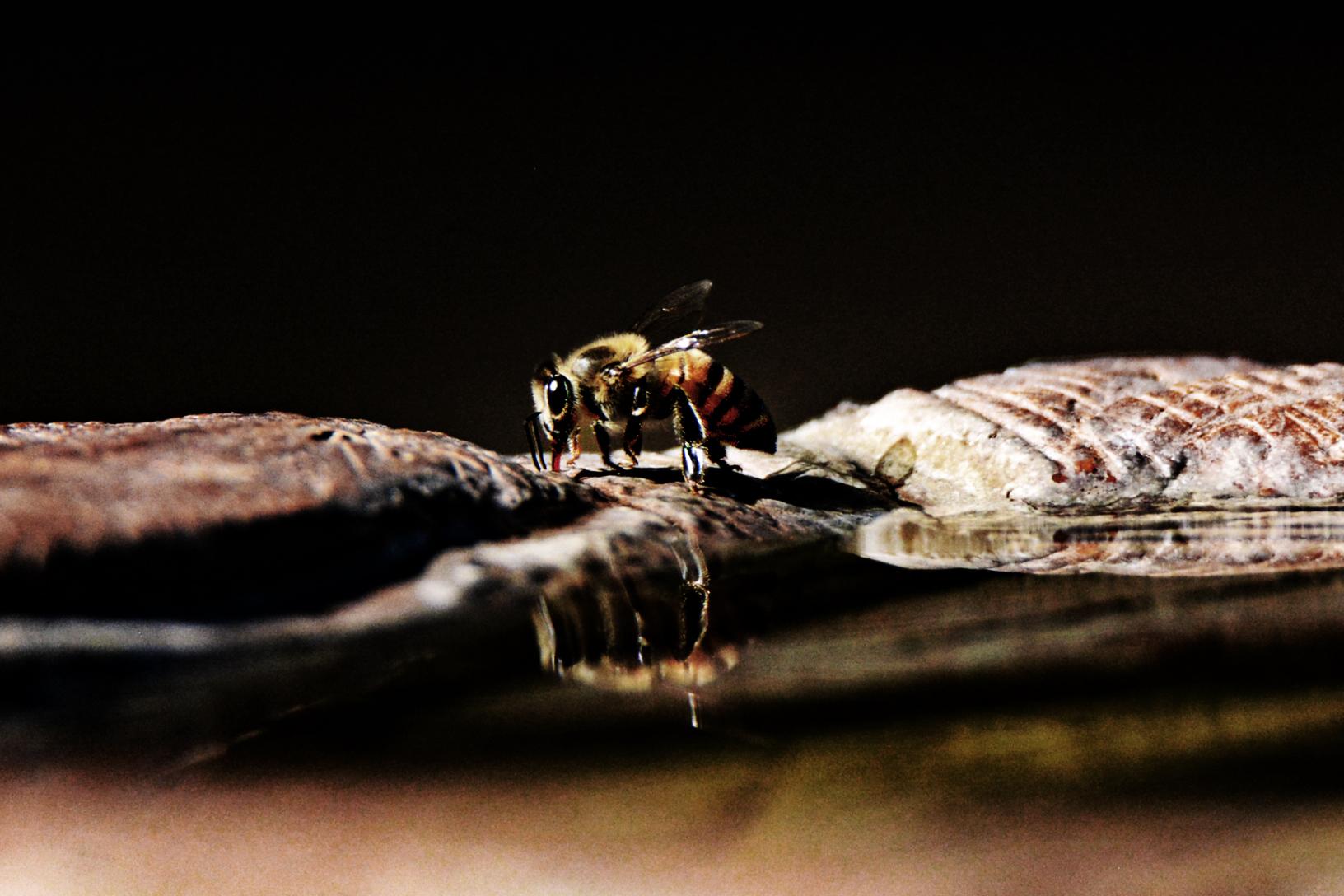 Drama Bee