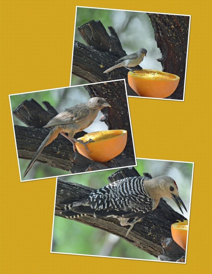 Orange Birds_01